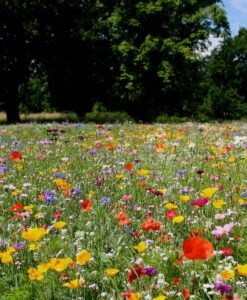 Indian Flower Meadow vloerkleed Brokking Vloerkledenspecialist.nl IJsselstein